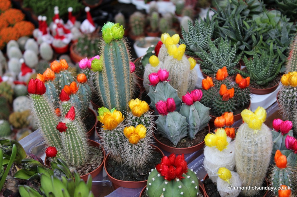 Columbia Road cacti
