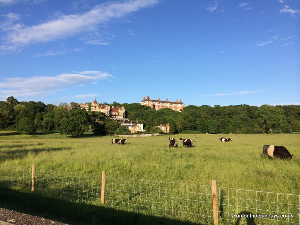 View over Richmond park