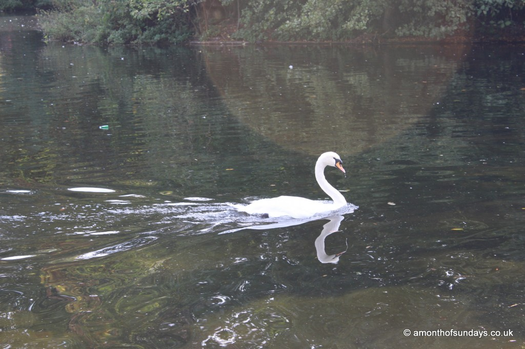 Bokeh swan