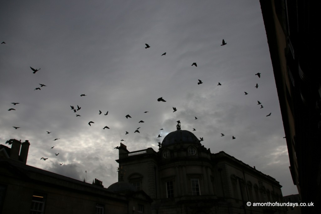 Birds over Pulteney Bridge