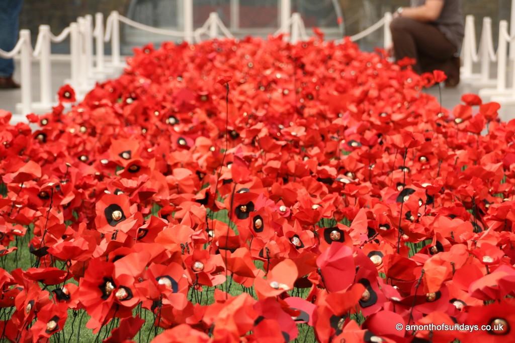 Poppy garden at Imperial War Museum