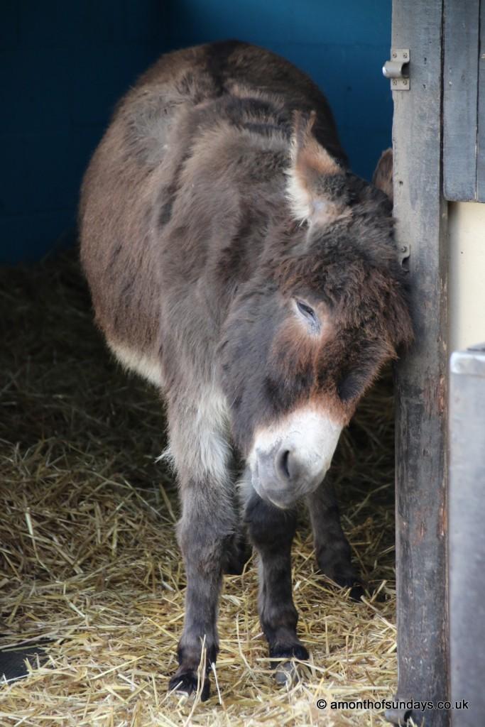 Donkey scratching