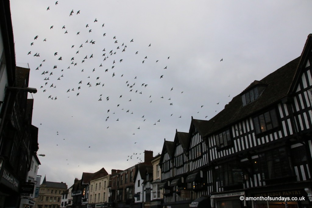 Starlings over Stratford-upon-Avon