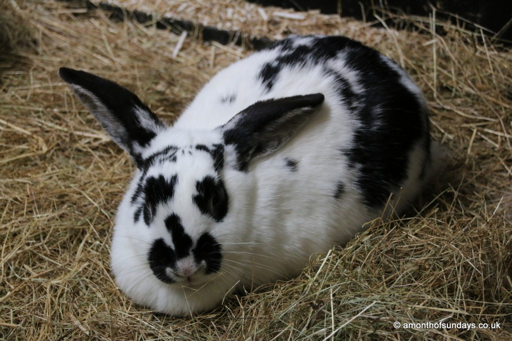 Bunny at Cotswold Farm Park