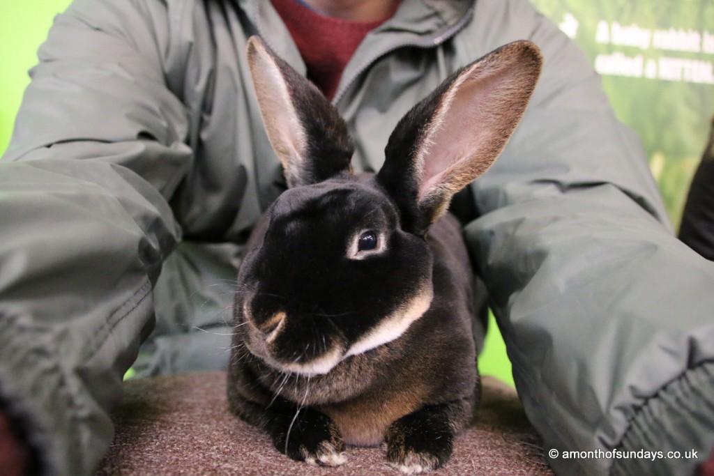 Rex bunny selfie at Cotswold Farm Park