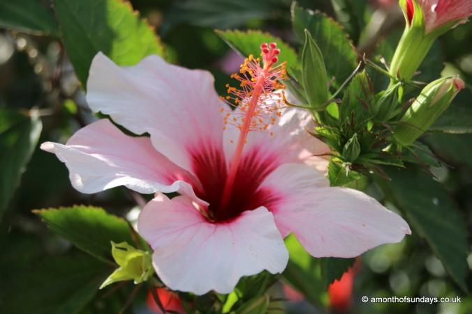 Flower in Tavira
