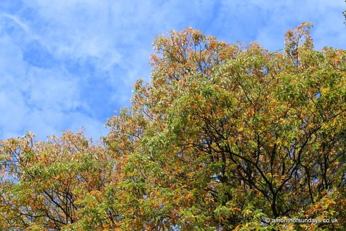 Tree on Hampstead Heath
