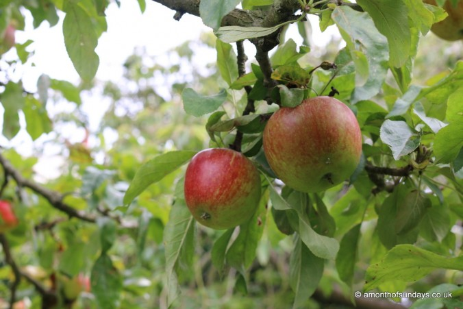 Apple trees at Fenton House