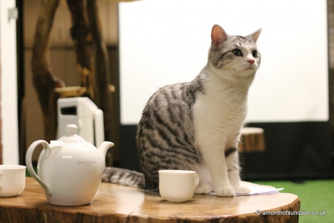 Tea at the London Cat Village