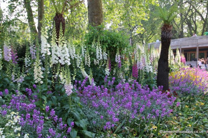 Foxgloves in St. James' Park